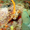 "Ko Lipe Diving - Nudibranch - Koh Lipe, Tarutao National Marine Park, Thailand • <a style=""font-size:0.8em;"" href=""http://www.flickr.com/photos/84280466@N07/10740367533/"" target=""_blank"">View on Flickr</a>"