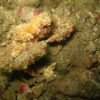 "Ko Lipe Diving - Decorator crab - Koh Lipe, Tarutao National Marine Park, Thailand • <a style=""font-size:0.8em;"" href=""http://www.flickr.com/photos/84280466@N07/9397666259/"" target=""_blank"">View on Flickr</a>"