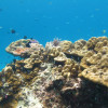 """Ko Lipe Diving - Coral reef scene at Koh Talang - Koh Lipe, Tarutao National Marine Park, Thailand • <a style=""""font-size:0.8em;"""" href=""""http://www.flickr.com/photos/84280466@N07/9355411965/"""" target=""""_blank"""">View on Flickr</a>"""