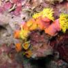 "Ko Lipe Diving - Wentletrap (Epitonium billeeanum) - Koh Lipe, Tarutao National Marine Park, Thailand • <a style=""font-size:0.8em;"" href=""http://www.flickr.com/photos/84280466@N07/7717658714/"" target=""_blank"">View on Flickr</a>"
