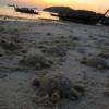 "Ko Lipe Diving - Sand turtles - Koh Lipe, Thailand, Tarutao National Marine Park • <a style=""font-size:0.8em;"" href=""http://www.flickr.com/photos/84280466@N07/7988066441/"" target=""_blank"">View on Flickr</a>"