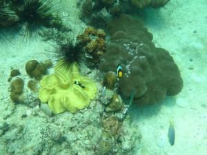 Ko Lipe Diving - Discover Scuba Diving