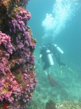Ko Lipe Diving - PADI Open Water Diver Course