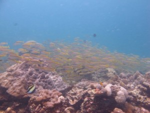 Ko Lipe Diving - PADI Open Water Referral