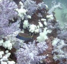 Ko Lipe Diving - Ko Sarang