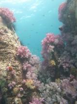 Ko Lipe Diving - Stonehenge