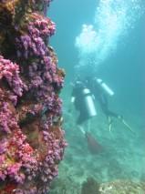 Ko Lipe Diving - Ko Yang East