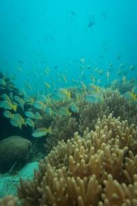 Ko Lipe Diving - Family DSD