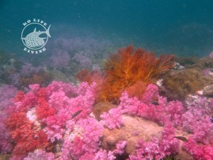 Soft corals galore, sea fans and countless anemones