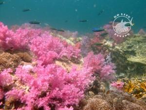 Stonehenge Ko Lipe scuba diving thailand soft corals